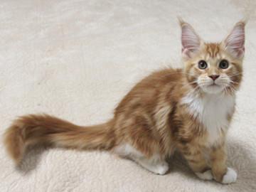 Misora_kitten2_13103002