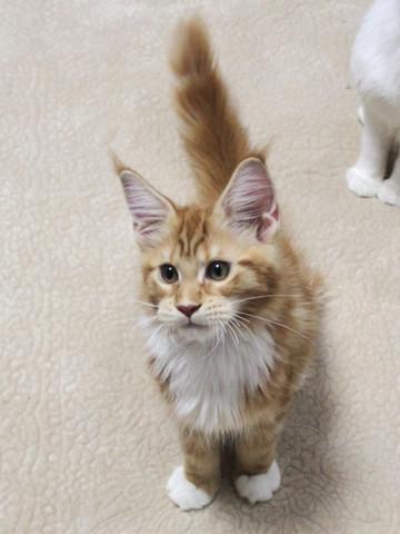 Misora_kitten2_13103003