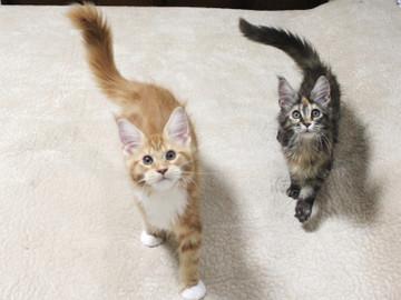 Misora_kittens_13103001