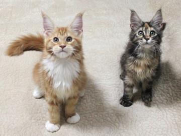 Misora_kittens_13103002