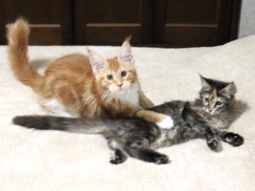 Misora_kittens_13103003