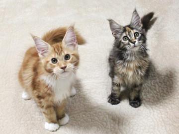 Misora_kittens_13103004