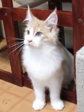 Aurora_kitten2_13112205