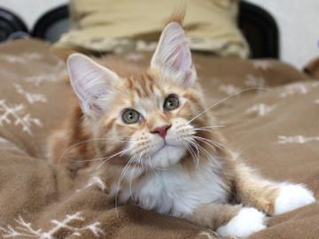 Misora_kitten2_13112402