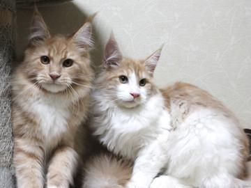Aurora_kittens_13112401