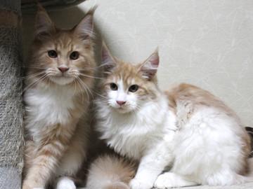 Aurora_kittens_13112402