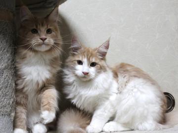 Aurora_kittens_13112403