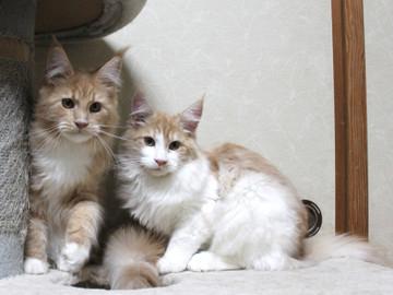 Aurora_kittens_13112404