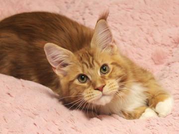 Misora_kitten2_13121802