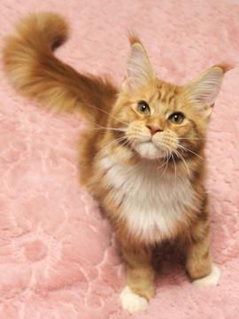 Misora_kitten2_13121803