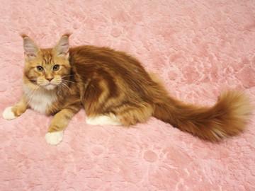 Misora_kitten2_13121804