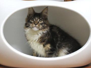 Non_stop_kitten_14021406