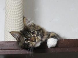Non_kitten_14030305