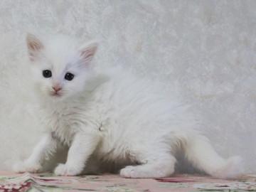Non_stop_kitten_14052501