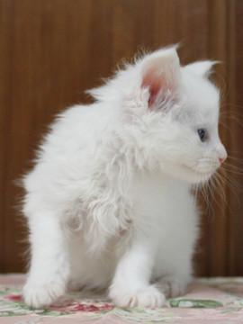 Non_stop_kitten_14052502