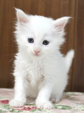 Non_stop_kitten_14052503