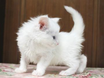 Non_stop_kitten_14052504