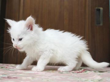 Non_stop_kitten_14052505