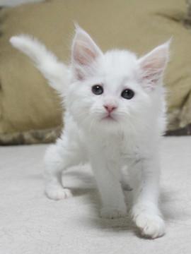 Non_stop_kitten_14061602
