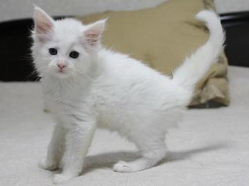 Non_stop_kitten_14061603