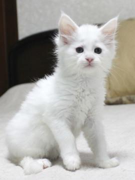 Non_stop_kitten_14061604