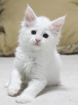 Non_stop_kitten_14061605