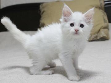 Non_stop_kitten_14061606