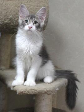 Polca_kitten3_14062402