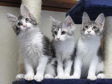 Polca_kittens_14062901