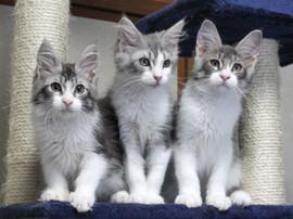 Polca_kittens_14062902