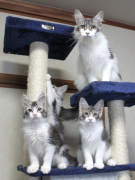 Polca_kittens_14062903