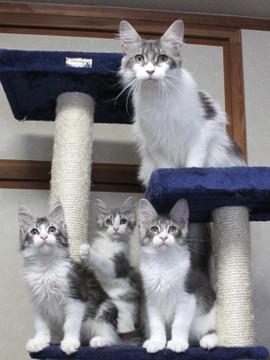 Polca_kittens_14062904