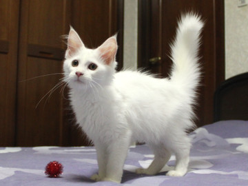 Non_stop_kitten_14082102