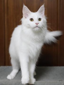 Non_stop_kitten_14102902