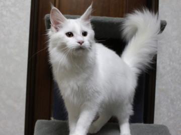 Non_stop_kitten_14102904
