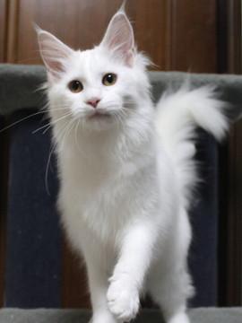 Non_stop_kitten_14102905