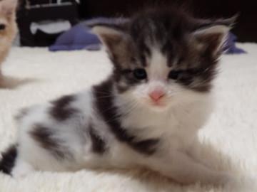 My_kitten_14112801