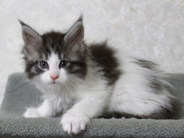 My_kitten_14122101