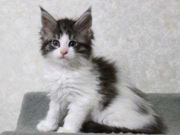My_kitten_14122102