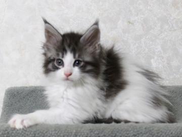 My_kitten_14122103
