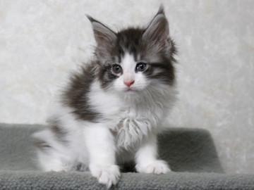 My_kitten_14122104