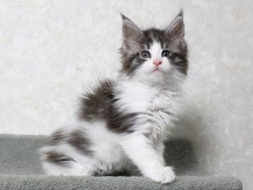 My_kitten_14122105