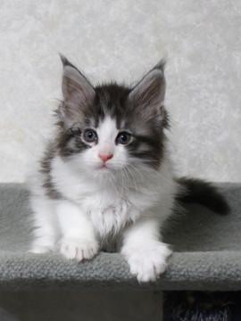 My_kitten_14122106