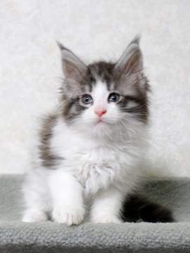 My_kitten_14122107