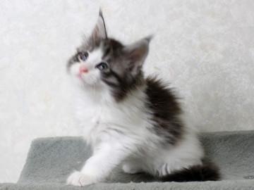 My_kitten_14122108