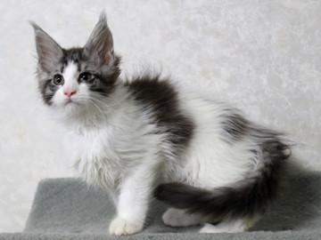 My_kitten_15012302