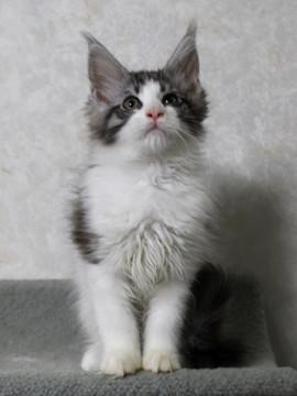 My_kitten_15012303