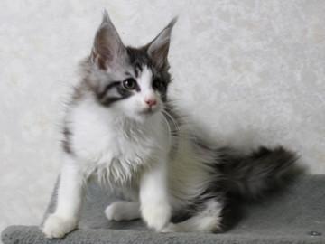 My_kitten_15012304
