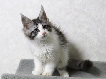 My_kitten_15012305