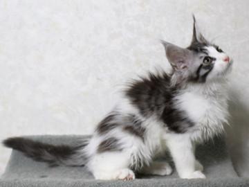 My_kitten_15012307